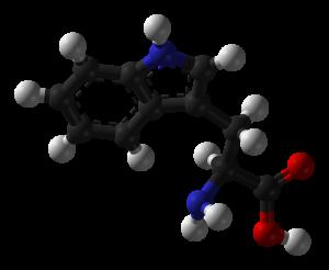 L-tryptophan-3D-balls